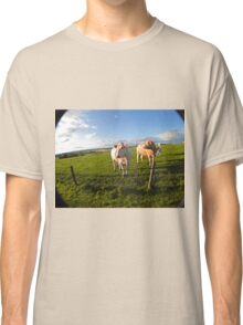 cows in sun Classic T-Shirt