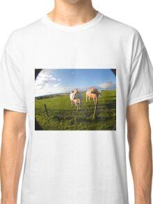 cows in sun Classic T-Shirt