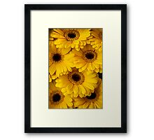 Yellow Gerbera Macro Framed Print