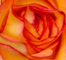 Gorgeous Golden Rose Sticker
