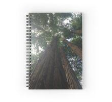 Muir Woods Forest  Spiral Notebook