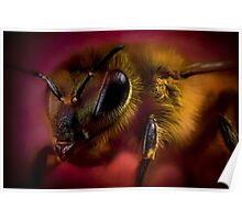 Sometimes you can bee too close Poster