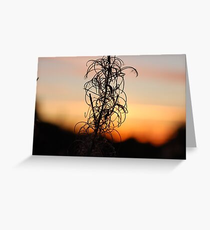 Leafy Sunset Silhouette Greeting Card