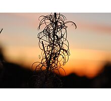 Leafy Sunset Silhouette Photographic Print