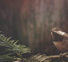 Chickadee in the Redwoods Sticker