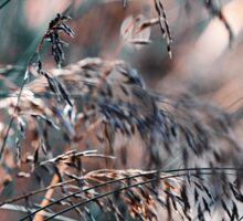 Silver Grass After Rain. Nature in Alien Skin Sticker