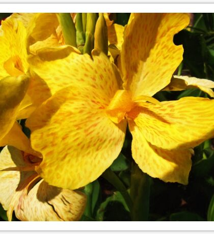 Yellow Canna Lily Sticker
