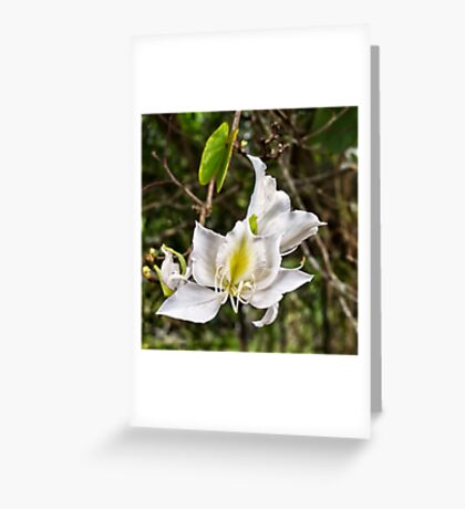 Beautiful Butterfly tree flower Greeting Card