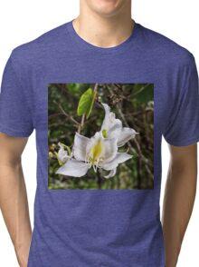 Beautiful Butterfly tree flower Tri-blend T-Shirt