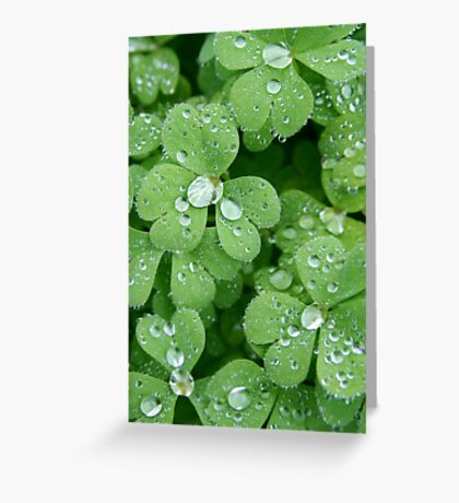 Clover with raindrops - 2011 Greeting Card