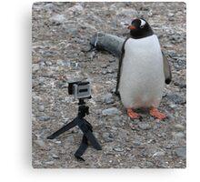 Gentoo penguin selfie in Antarctica  Canvas Print