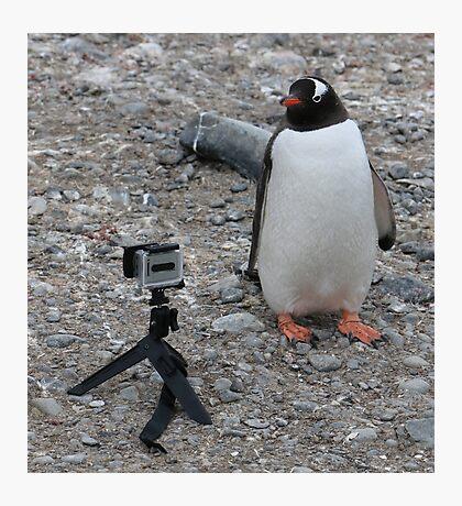 Gentoo penguin selfie in Antarctica  Photographic Print