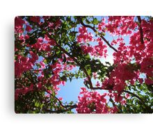Perfect Pink Bougainvillea In Blossom Canvas Print