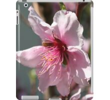 Close Up of Peach Tree Blossom iPad Case/Skin