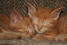Sweet Kitten Dreams by Jo Nijenhuis