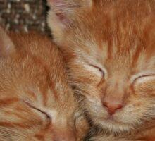 Sweet Kitten Dreams Sticker