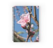 Delicate Buds of Peach Tree Blossom Spiral Notebook