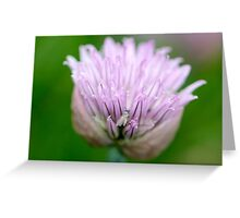 Chive Blossom and Hidden Fly Greeting Card