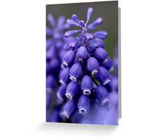 Macro Grape Hyacinth 1 Greeting Card