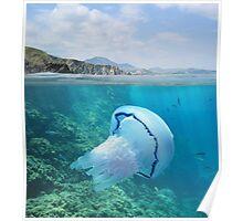 Rocky coast with jellyfish underwater Mediterranean sea Poster