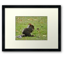 Fancy a nibble? Framed Print
