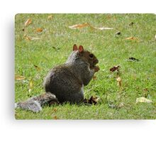 Fancy a nibble? Canvas Print