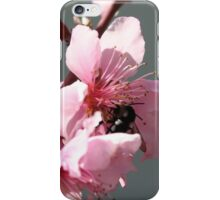 Unidentified Winged Insect On Peach Tree Blossom iPhone Case/Skin