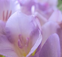 Freesia Dreams... by NaturesTouch