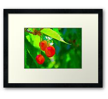 Red Cherries Painting Framed Print