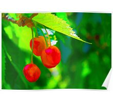 Red Cherries Painting Poster