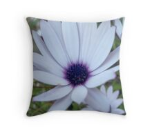 White Osteospermum Flower Daisy With Purple Hue Throw Pillow