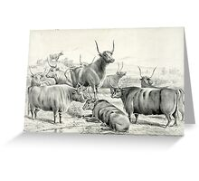 A prize herd - Currier & Ives - 1881 Greeting Card