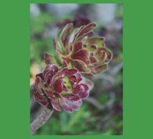 Close Up Of Aeonium Succulent With Garden Background Baby Tee