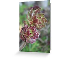 Close Up Of Aeonium Succulent With Garden Background Greeting Card