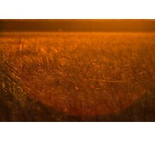 Silk Sunset - Spiderwebs at Sunset Photographic Print