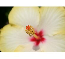 Stamen With Yellow Hibiscus Petal Background Photographic Print