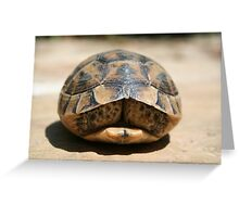 Tortoise Hiding In Its Shell  Greeting Card