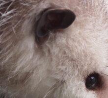 Opossum Sticker