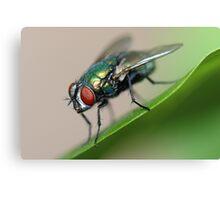 Iridescent Fly Canvas Print