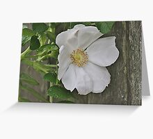 Beach plum rose and weathered fence Greeting Card