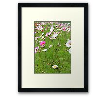 Field of cosmo - 2011 Framed Print