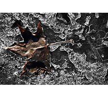 Winter Leaf Capture Photographic Print