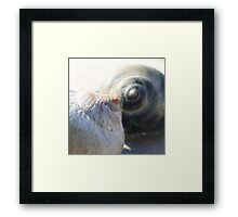 Sea snail shell in profile - 2016 Framed Print
