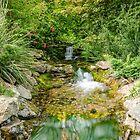 Botanical Water  by Martina Fagan