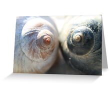 Sea snail shells close up - 2016 Greeting Card
