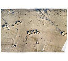 Deep footprints big dog on the sandy shore Poster