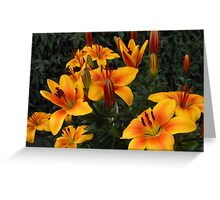 Amber Lilies at Day's End Greeting Card