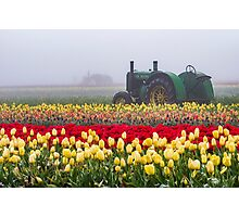 Yellow tulips and tractors Photographic Print
