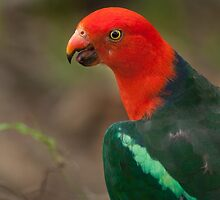 King Parrot by Belle Farley