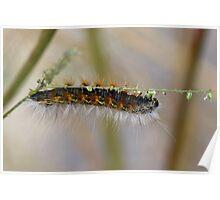 Hang in There Fuzzy Caterpillar 1 Poster